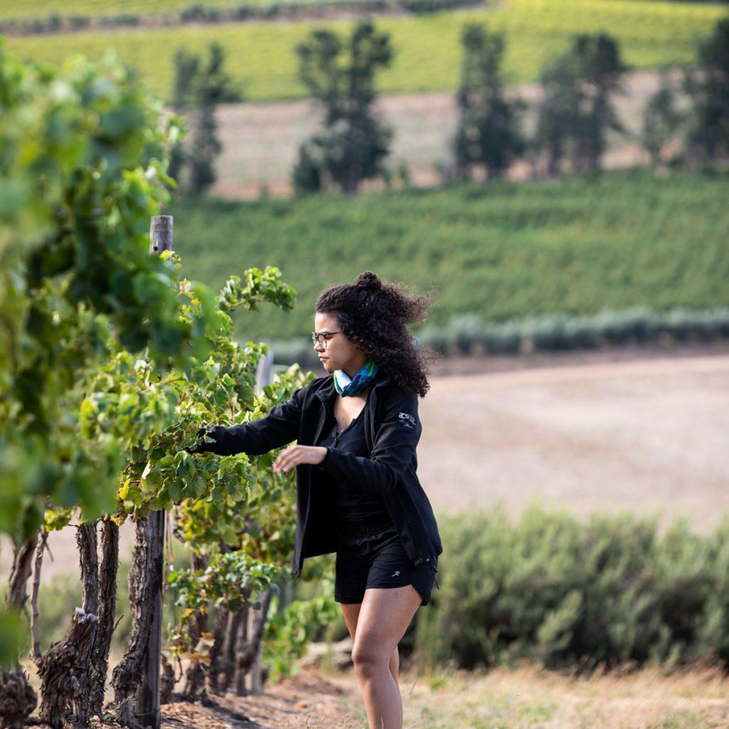 Kiara Scott Brookdale Winemaker inspecting the vines